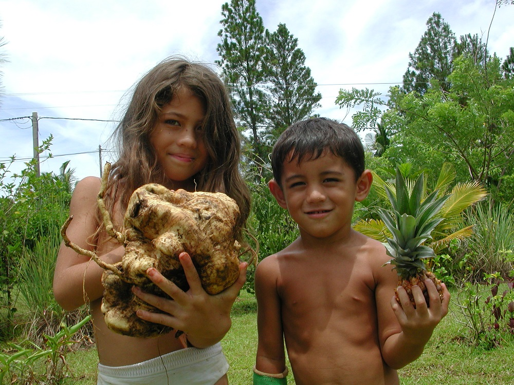 Wallis et Futuna, potato, 2003